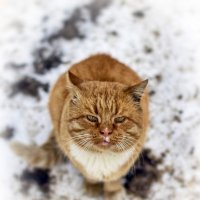 Cat :: Евгений Балакин
