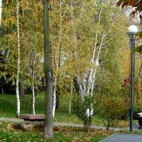 Осенние берёзы... :: Тамара (st.tamara)
