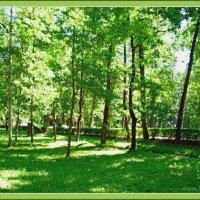 Краски весны :: Лидия (naum.lidiya)