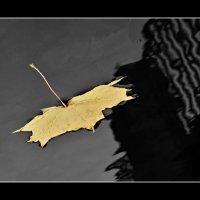 Портрет кленового листа в рамке..)) :: tipchik