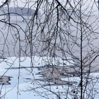 Зимняя графика :: Светлана Игнатьева