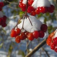 первый снег :: Евгений Гузов