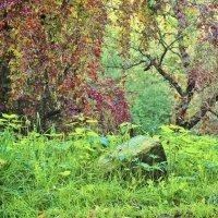 Осень :: Svetlana Sneg
