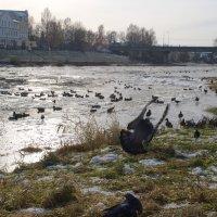 На реке Тверце. :: Лилия Гудкова
