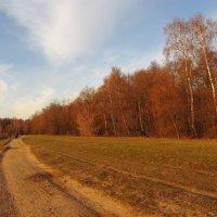 Бронзовая осень на пруду - IMG_3760 :: Андрей Лукьянов