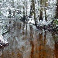 Сказочный лес :: Павлова Татьяна Павлова