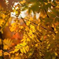 Золото осени :: Ната Анохина