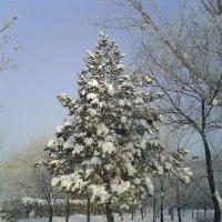 Снегурочка. :: Александр