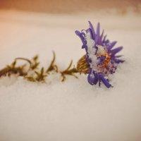 Неочікувана поява зими :: Asya Gosh