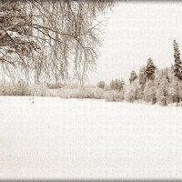 Снежно, иней :: Лидия (naum.lidiya)