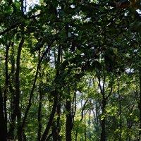 Осень в Университетском бот. саду Фото №3 :: Владимир Бровко