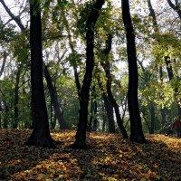 Осень в Университетском бот. саду Фото №4 :: Владимир Бровко