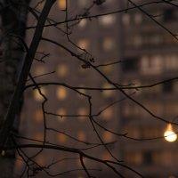 А потом наступит ночь  (2) :: Анатолий Бастунский