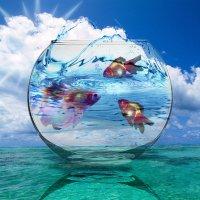 аквариум :: Наталья-13 Аветова