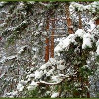 лесной декор... :: Галина Филоросс