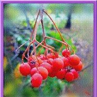 Осенний этюд на природе 2 :: Лидия (naum.lidiya)