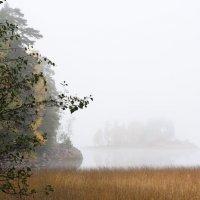 Укрытый туманом :: Татьяна Петранова