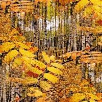 Осенний калейдоскоп :: Мария Богуславская