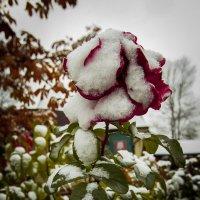 первый снег :: Константин Нестеров