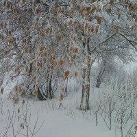 Красавица зима. :: Наталья А