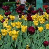 Городские цветы :: Сергей Галкин
