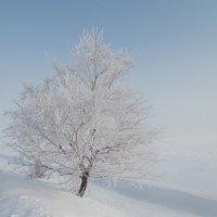 У дороги. :: Наталья А
