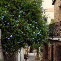Улочки в  деревне Беллапаис, Северный Кипр :: Anna Lipatova
