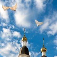 Летите голуби, летите! Для вас нигде преграды нет! :: Алёна Михеева