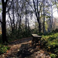 """Осень в парке """"Аскольдова могила"""" Фото №3 :: Владимир Бровко"""