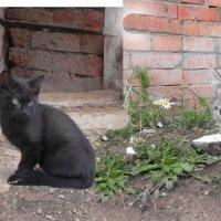 Котята. :: Oleg4618 Шутченко