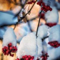 Зима :: Юра Викулин