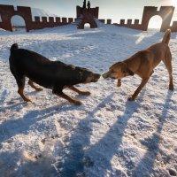 Жизнь собачья :: Margarita Shrayner