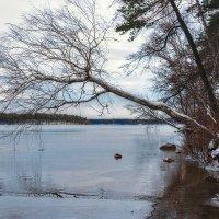 Зима идет :: Андрей Пашков