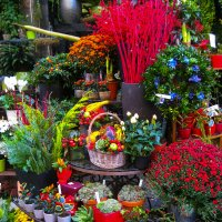в цветочном магазине... :: Саша Ш.