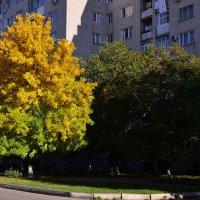 осень :: ГАЛИНА ЧАЛОВА