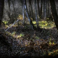 В лесу на закате...2 :: Андрей Войцехов
