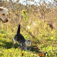 поймай котенка :) :: Алексей Яковлев