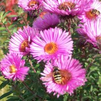 Последние цветы октября :: Виктор Елисеев