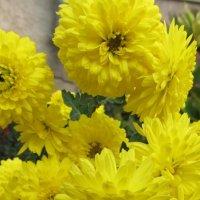 Цветы :: Яна Чепик