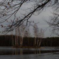 Последние листья.... :: Юрий Цыплятников