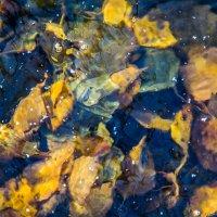 Замороженная листва :: Дмитрий