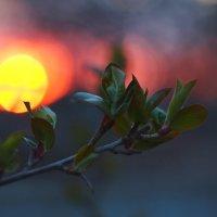 Весенний закат :: Сергей Санин
