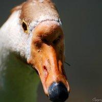 А нос, как у собаки, а глаз, как у орла :: Илья Кочанов