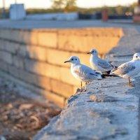 Чайки :: Гульшат