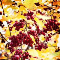 Осень :: Анна Левит
