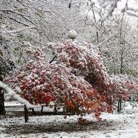 Октябрьский снег :: Ekat Grigoryeva