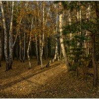 Вспоминая осень... :: Сергей Бережко