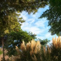В саду Дездемоны, Фамагуста :: Anna Lipatova