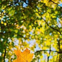Осень :: Вадим Бережной