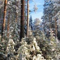 Снежной, белою зимою. :: Юрий Кузмицкас